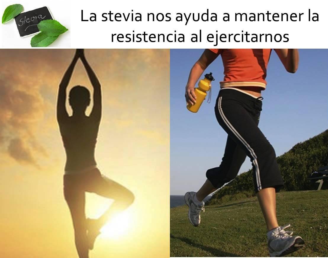 La stevia nos ayuda a mantener la resistencia al ejercitarnos1