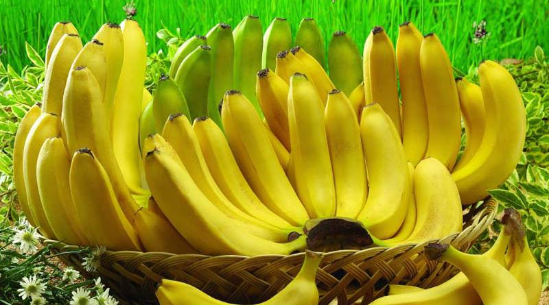 Platano o banana